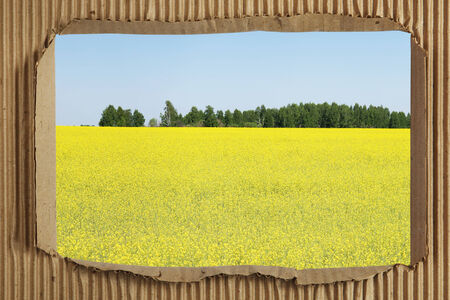 Field of blossoming rape through hole in corrugated cardboard photo