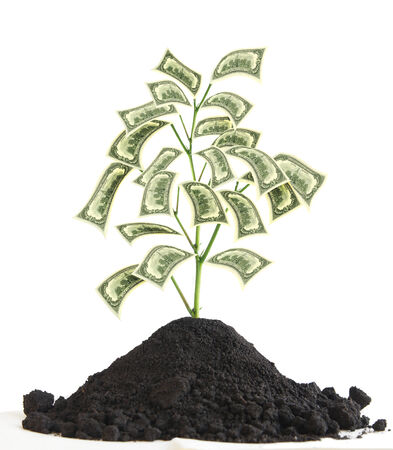 Money Tree with US Dollar banknotes as leaves isolated over white background photo