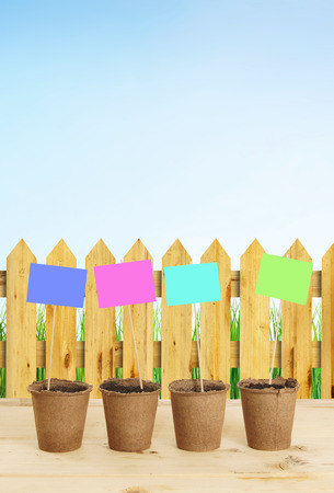 Peat pots with multicolored nameplates stand near wooden fence against blue cloudless sky photo