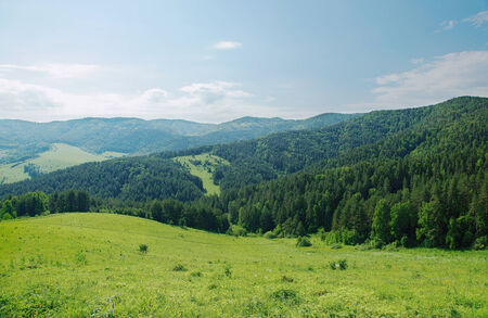 wooded: Beautiful summer alpine landscape with green wooded mountains