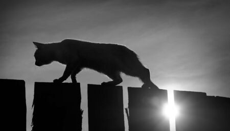 sneak: Black and white toned image with a cat walking on the fence Stock Photo