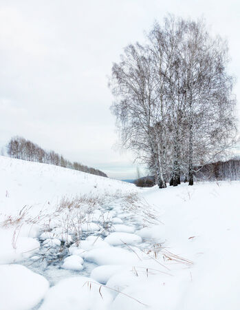 frozen creek: Winter landscape with a frozen creek and birches