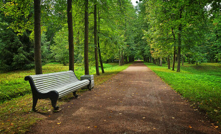 streight: Landscape with empty linden alley and a bench in the park