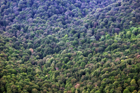 forested: Thick forested slope of the mountain Stock Photo