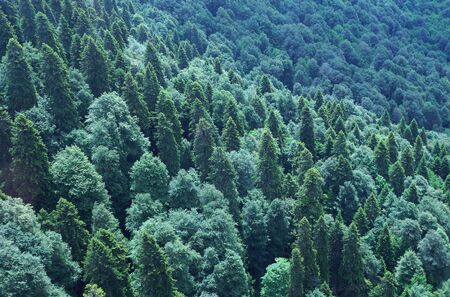 forested: View from above to forested mountain slope in summer Stock Photo