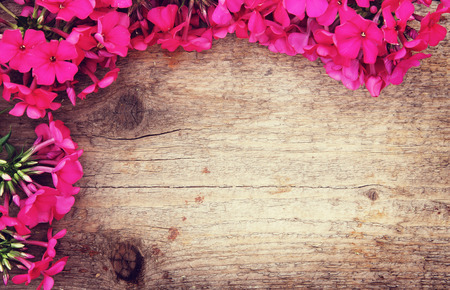 disign: Natural wooden background with a corner made of bright red phlox flowers Stock Photo
