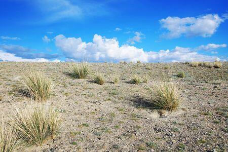lifeless: Lifeless stony desert and tufts of grass Stock Photo