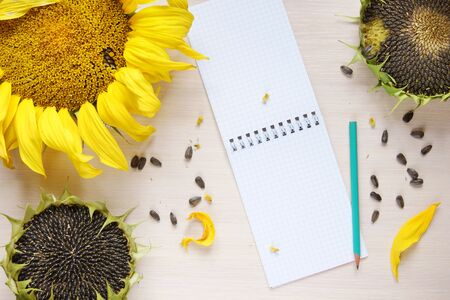 scratchpad: Composition with sunflowers and empty sheets of the notepad