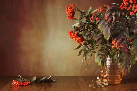 rowan tree: Autumn still life with rowan tree branches in the vase