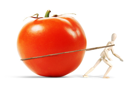 marioneta de madera: Man drags a huge ripe tomato. Abstract image with a wooden puppet Foto de archivo