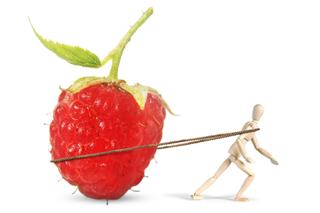 marioneta de madera: Man drags a huge ripe raspberry. Abstract image with a wooden puppet