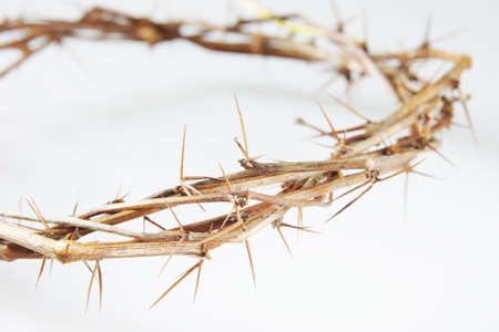 torment: Crown of Thorns on light background
