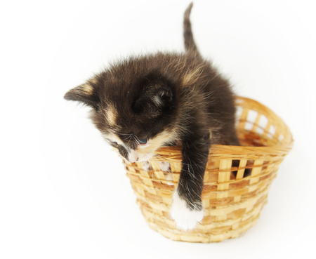 spotted fur: Playful funny kitten in the wicker basket on white background Stock Photo