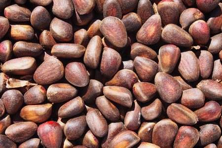 Background made of close up cedar nuts Stock Photo