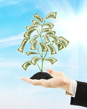 man holding money: Man holding money tree on his palm. Concept of wealth and income growth