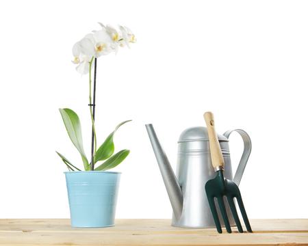 蘭の花、白い背景で隔離の水まき缶のコンポジションをガーデニング