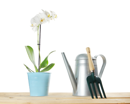 Gardening composition with orchid flower and watering can isolated over white background Фото со стока