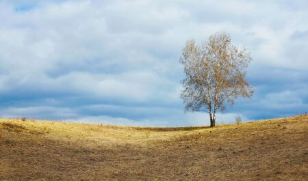 Springtime landscape with a remote lonely birch tree on horizon and cloudy sky