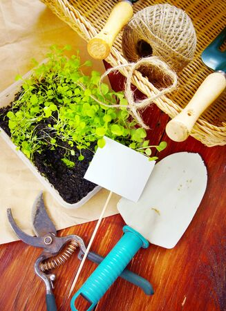 Gardening composition with garden tools and seedlings for transplantation on wooden boards Stock Photo