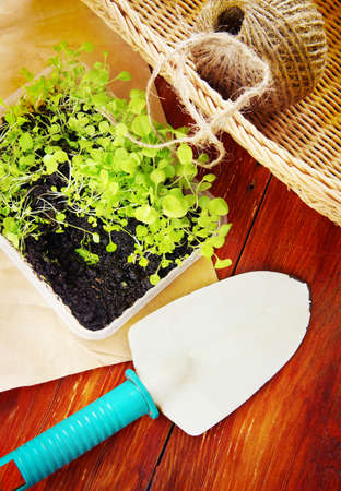 Gardening composition with seedlings for transplantation and garden tools on wooden boards