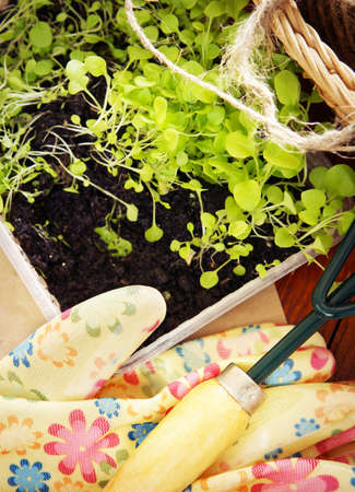 Gardening still life with garden tools and seedlings for transplantation on wooden boards