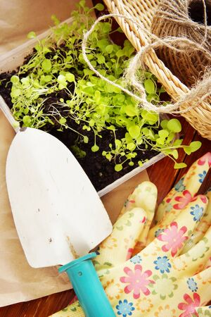Gardening still life with seedlings for transplantation and garden tools on wooden boards
