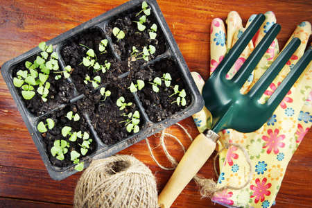 Gardening composition with seedlings and garden tools