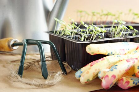 Gardening rake and green seedlings for transplantation