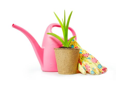 peat pot: Gardening still life with green plant in the peat pot and garden tools isolated on white background