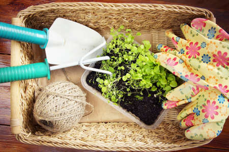 Wicker basket with garden tools and seedlings