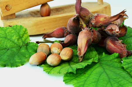 nut shell: Hazelnuts with crack a nut shell