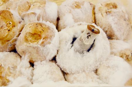 fungi: Rotten mushrooms and fungi