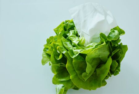 colds: Eating vegetables can prevent colds. Tissues in butter lettuce on white background.