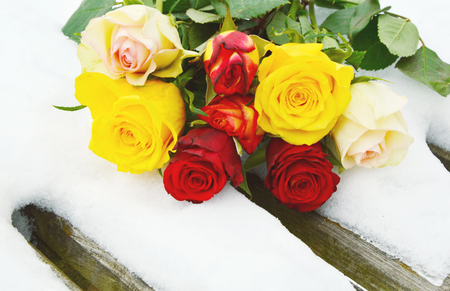 many colorful roses mixed with snow in wintertime on wooden bridge.