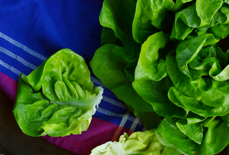colorful and fresh butterhead lettuce with shadow on wooden background Stock Photo