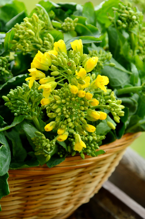 Fresh rapeseed leaves and flowers in a basket for cooking Stock Photo