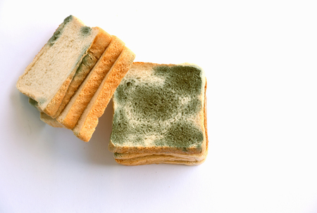 Mold growing rapidly on moldy bread on white background.