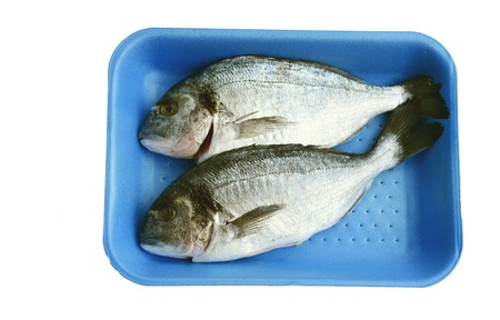 Gilt-head bream or (German name is Goldbrasse) in blue  pastic tray on white background.