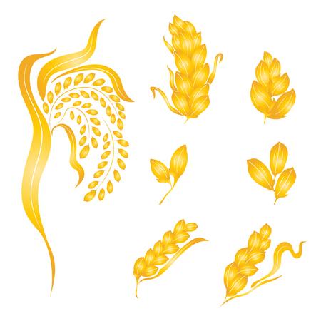 rice grain: Rice design on white background , rice plant, rice grain isolated, illustration