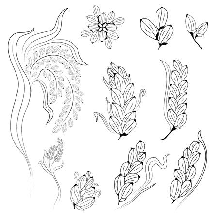 reis gekocht: Reis-Design auf wei�em Hintergrund, Reispflanzen, Reiskorn isoliert, illustration Illustration