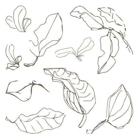 Vector drawing sketch line art sketching set of vector leaves symbols elements Vectores