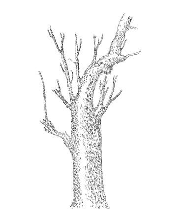Hand gezeichnet Baum Silhouette, Skizziert, Baum Hand gezeichnete Skizze Illustration isoliert auf weißem Hintergrund Vektorgrafik