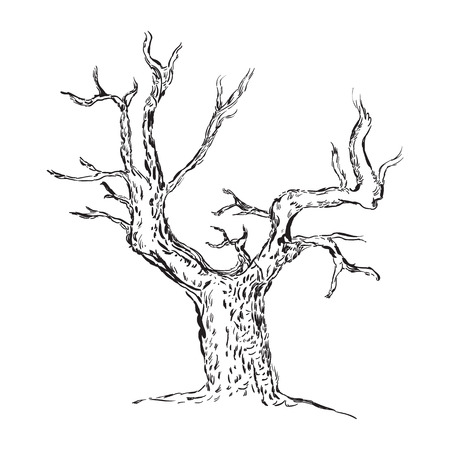 Hand drawn tree silhouette, Sketched, Tree Hand drawn sketch illustration isolated on white background