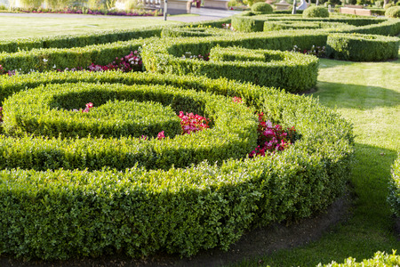 evergreen plants and geometrically trimmed shrubs in landscape design