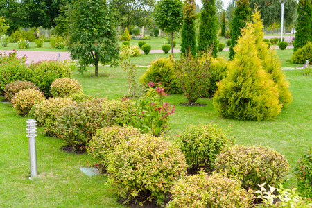 green shorn plants for the decoration of flower beds and lawns in the landscape of the city