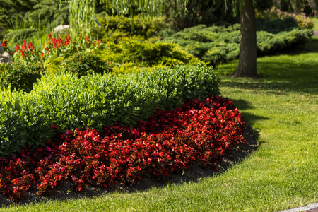 flowerbed with flowers in the design of landscape design