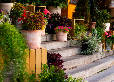 decoration of flowers and wood of the entrance group on stone steps in a public place