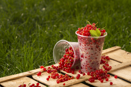 Red currant in a plastic glass in the garden against a background of green grass