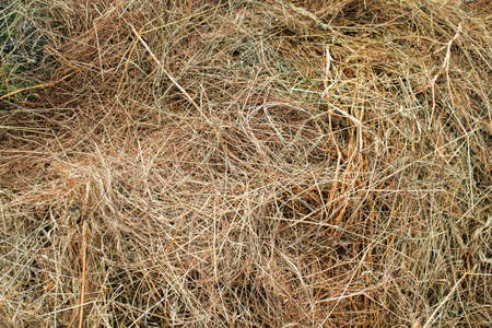 texture of dry hay from grass for livestock Фото со стока