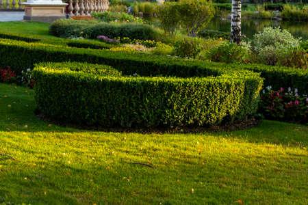 trimmed geometric bushes in landscape design at sunset